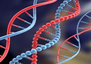 ADN acredita la inocencia