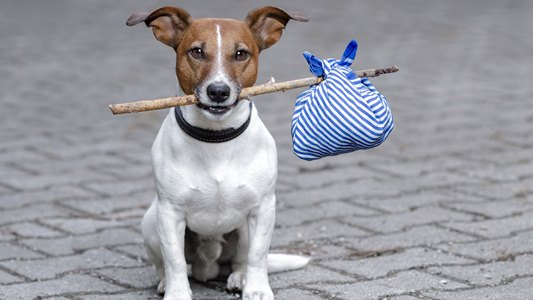 delito de abandono de animales